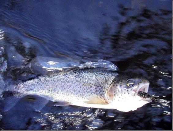 fishing November 16, 2012 005