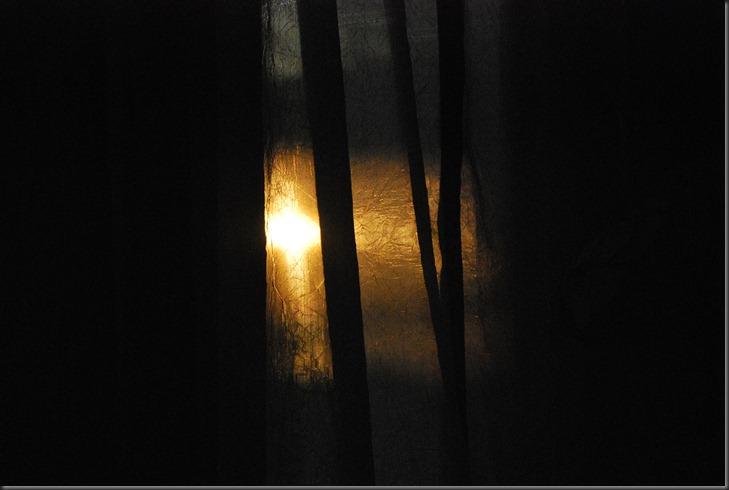 joes stump and sunrise Feb 9, 2013 012