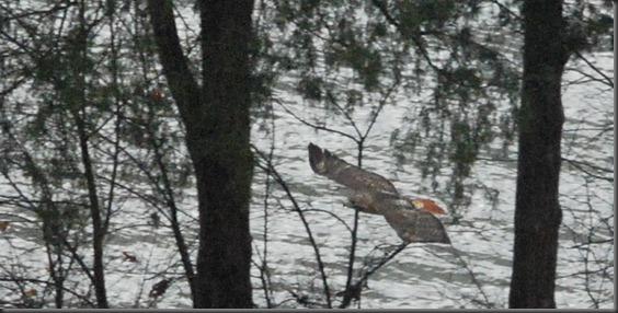 lake feb 26, 2013 007 crop