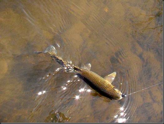 fishin March 8, 2013 010