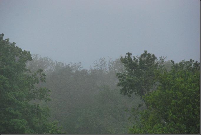 fog 004