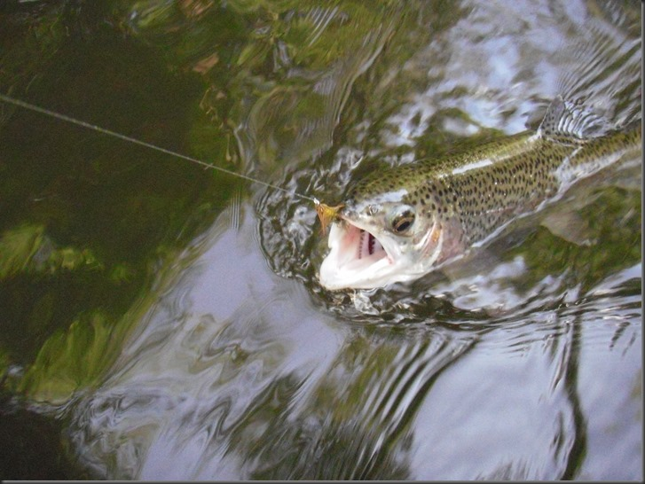fishing June 24, 2013 010