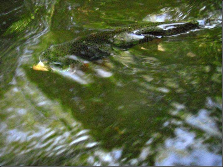fishing June 24, 2013 022