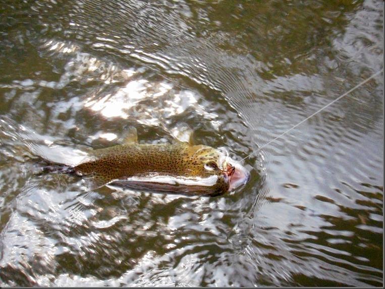 fishing September 16, 2013 040
