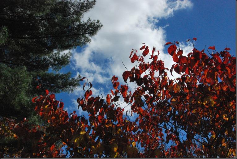 trees 023