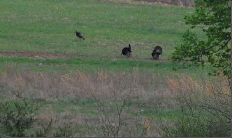 turkey 006