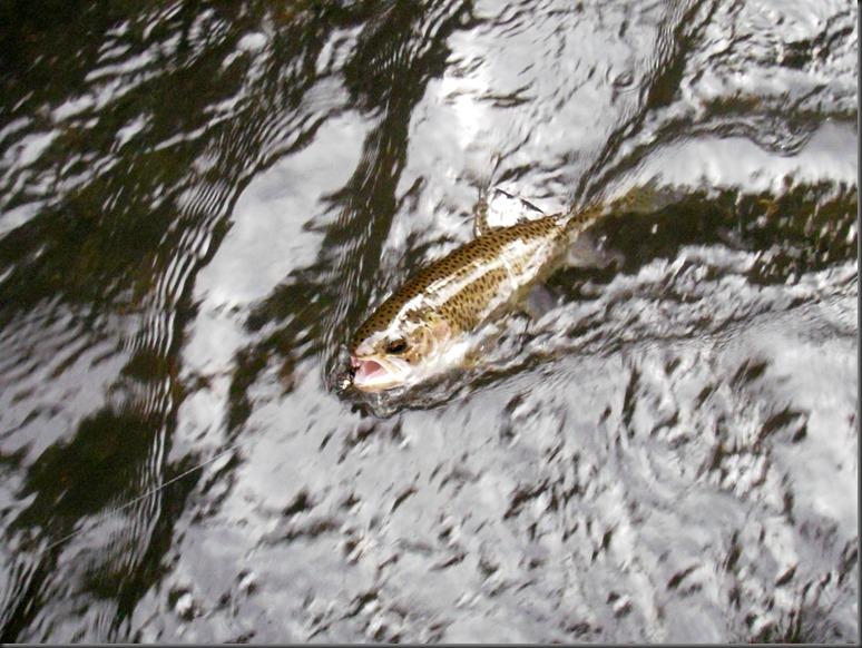 fishin June 4, 2014 008