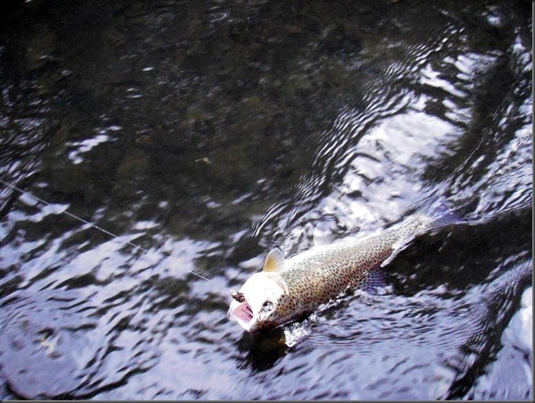 fishin June 4, 2014 010