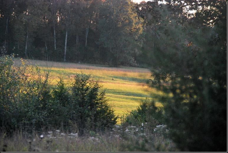 sunset oct 20, 2014 the farm 006